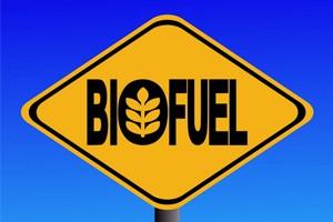 Биотопливо, как альтернативный источник энергии