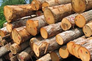 Для биотоплива нужно больше деревьев