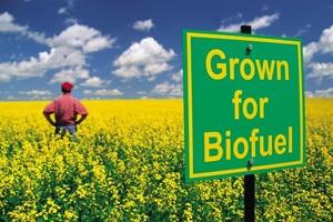 Европарламент поддерживает переход на биотопливо