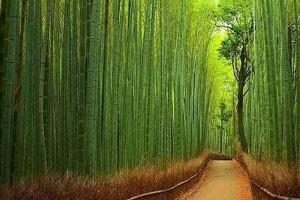 Электроэнергия из бамбука