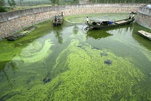 Ученым выделили 1 миллион долларов на развитие биотоплива из водоростей