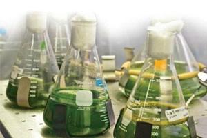 Генетическая модификация растений для производства биодизеля