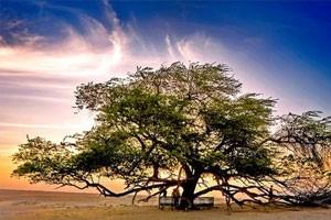 Мескитовое дерево как дополнительный источник сырья для биотоплива