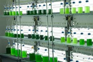 Algenol ведет работу по производству биотоплива и снижению выбросов углекислого газа в Китае