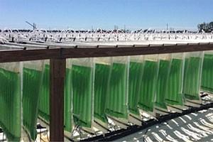 Компания Algenol поставляет в промышленных масштабах этанол, произведенный из водорослей